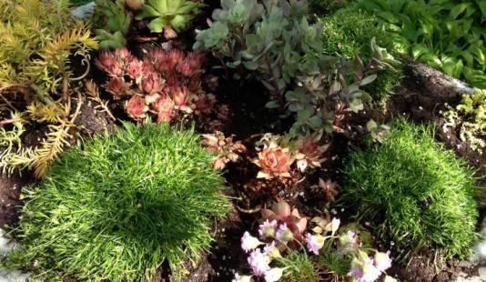 Exterior Succulent Planters