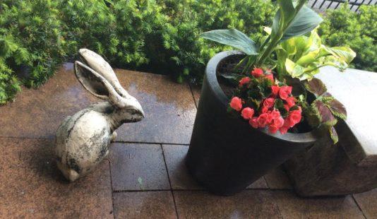 gardenn landscaping