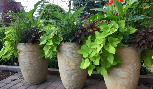 garden design pots finer-things ottawa